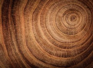 Close up of a round cut of wood